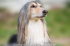 Cizillia du Persia Chanaz Khan