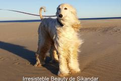 Irresisteble Beauty de Sikandar