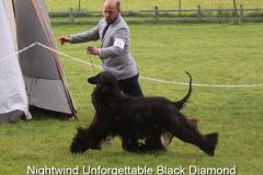 Nightwind Unforgettable Black Diamond